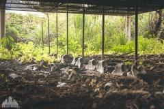 deadinside-urbex-dead-inside-natalia-sobanska-urbex-abandoned-amusement-park-theme-park-encore-garden-Taiwan-20-of-44