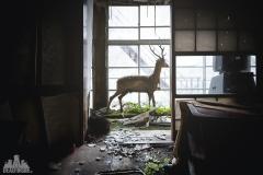 deadinside-urbex-dead-inside-natalia-sobanska-abandoned-abandoned-hotel-kappa-onsen-hotel-haikyo-Japan-22-of-23